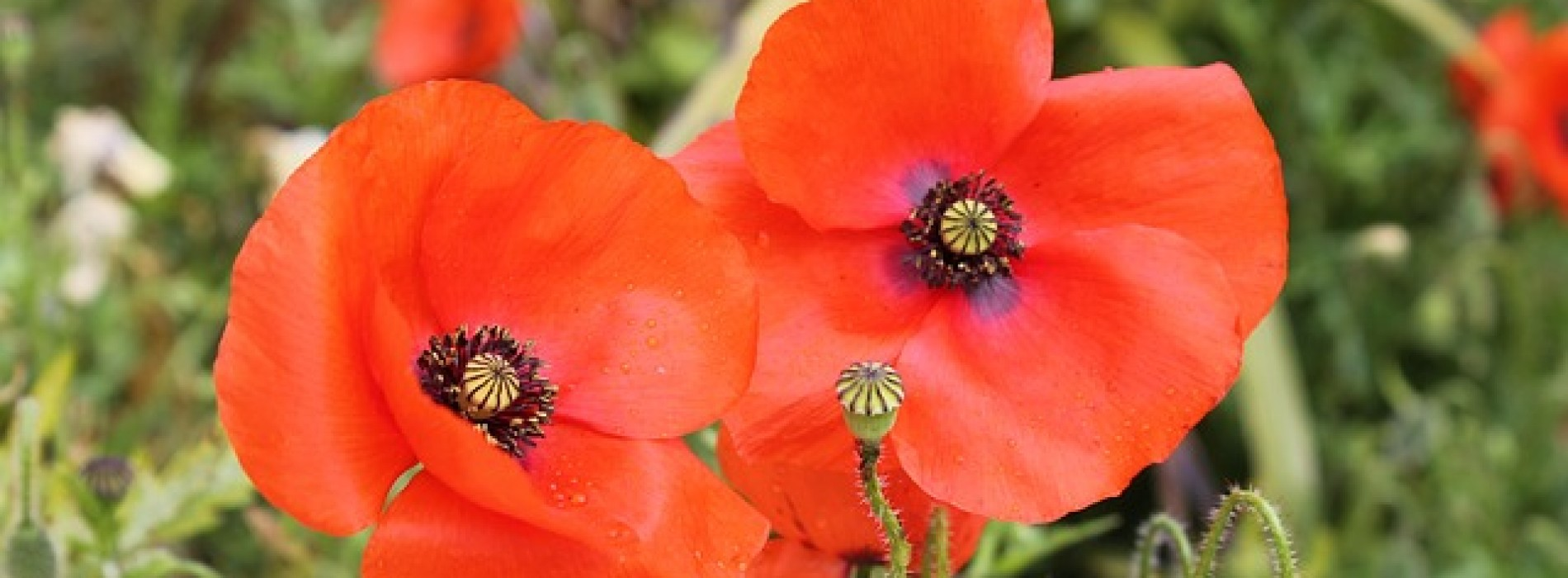 Remembrance Day in Bermondsey and Rotherhithe