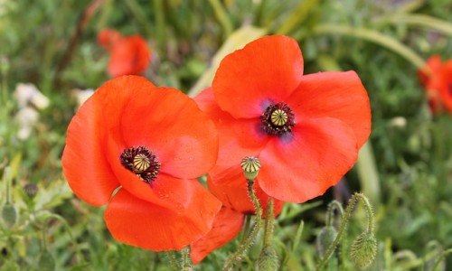 Southwark Remembers Armistice Day 2017 events