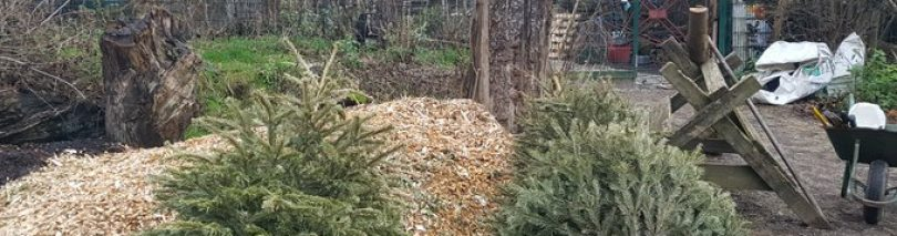 Recycle your Christmas trees at Stave Hill Ecology Centre